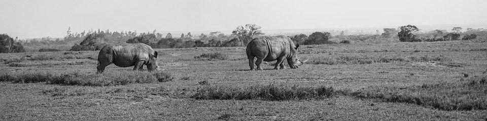 rhino-territory