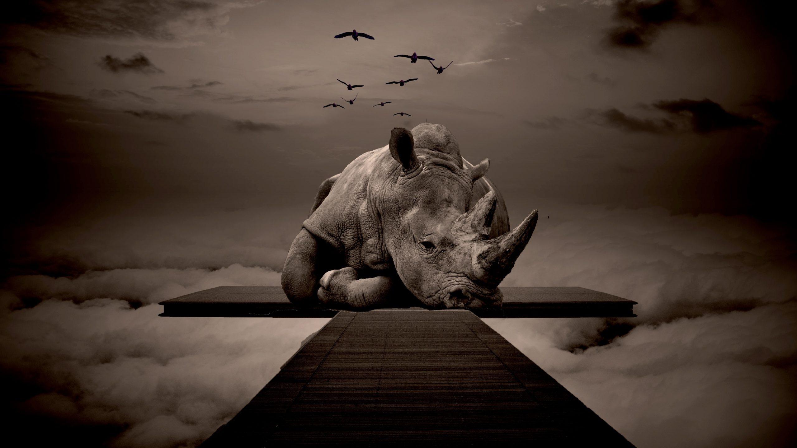 save-the-rhino