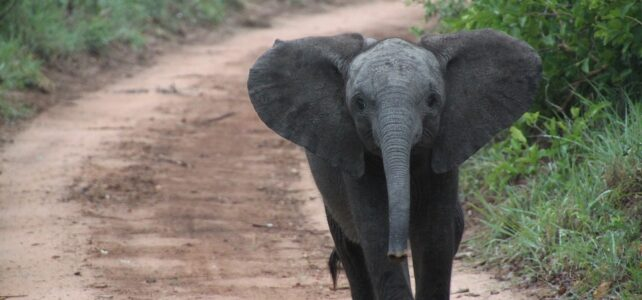 Saving elephants through community based conservation